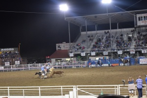 Calf Roping at the Cody Rodeo